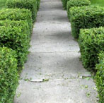Trimming Bushes